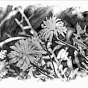 Zinnia Blossoms Poster