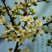 Blossomtime Poster