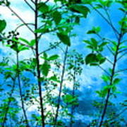 Nature's Gifts Of Blue And Green Poster