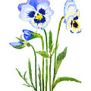Blue And Purple Pansies  Poster