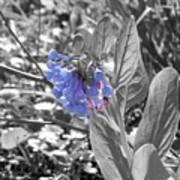 Blue Bell Flower Poster