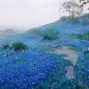 Blue Bonnet Field Early Morning Poster