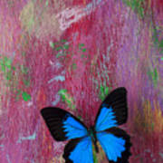 Blue Butterfly On Colorful Wooden Wall Poster