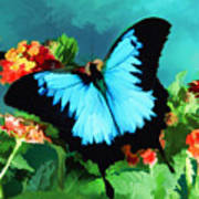 Blue Butterfly On Lantana Plant Oil Painting Poster