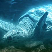 Blue Depths Sea Turtle Poster
