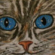 Blue Eyed Tiger Cat Poster
