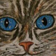 Blue Eyed Tiger Cat Poster
