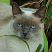 Blue Eyes In The Garden Poster