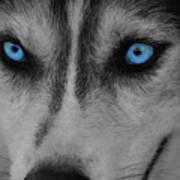 Blue Eyes Poster