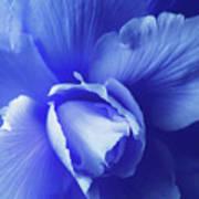 Blue Floral Begonia Poster