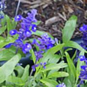 Blue Flower B6 Poster