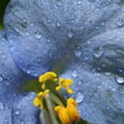 Blue Spring Flower Poster