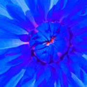 Blue Flower Poster