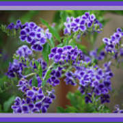 Blue Flowers With Colorful Border Poster