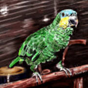 Blue-fronted Amazon Parrot Poster