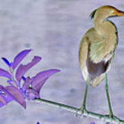 Blue Heron Colorized Poster