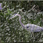 Blue Heron In Grass 4566 Poster