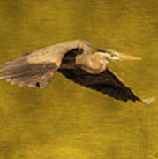 Blue Heron On Gold Poster