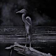 Blue Heron Pose Poster