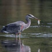 Blue Heron Snack Poster