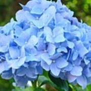 Blue Hydrangea Floral Art Print Hydrangeas Flowers Baslee Troutman Poster