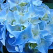 Blue Hydrangea Floral Flowers Art Prints Baslee Troutman Poster