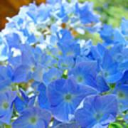 Blue Hydrangea Flowers Art Prints Summer Hydrangeas Baslee Poster