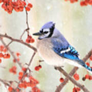 Blue Jay In Snowfall Poster