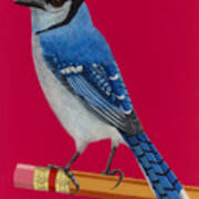 Bluejay Perched On Pencil Poster
