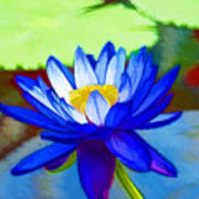 Blue Lotus Flower Poster