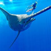 Blue Marlin Magic Poster