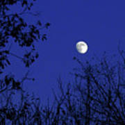Blue Moon Among The Tree Tops Poster