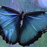 Blue Morpho Butterfly Portrait Poster