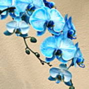 Blue Mystique Orchid Poster
