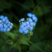 Blue Native Bloom Poster
