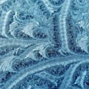 Extraordinary Hoarfrost Scallop Patterns In Blue Poster