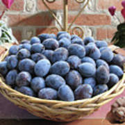 Blue Plums In A Basket Poster