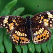 Blue Ridge Butterfly Poster