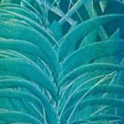Blue Sago Poster