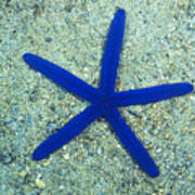 Blue Sea Star Or Starfish On Sand Poster