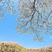 Blue Skies And Dogwood Poster