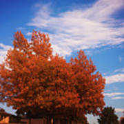 Blue Sky Autumn Poster