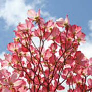 Blue Sky Clouds Landscape 7 Pink Dogwood Tree Baslee Troutman Poster