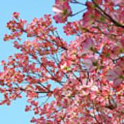 Blue Sky Floral Art Print Pink Dogwood Tree Flowers Baslee Troutman Poster