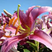 Blue Sky Floral Landscape Pink Lilies Art Prints Canvas Baslee Troutman Poster