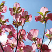 Blue Sky Landscape White Clouds Art Prints Pink Dogwood Flowers Baslee Troutman Poster