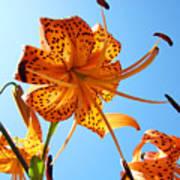 Blue Sky Tiger Lily Floral Garden Art Prints Baslee Troutman Poster