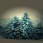 Blue Spruce-maine Evergreens Poster