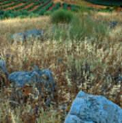 blue stones amongst the olive groves near Iznajar Andalucia Spain Poster