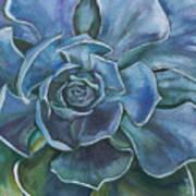 Blue Succulent Poster
